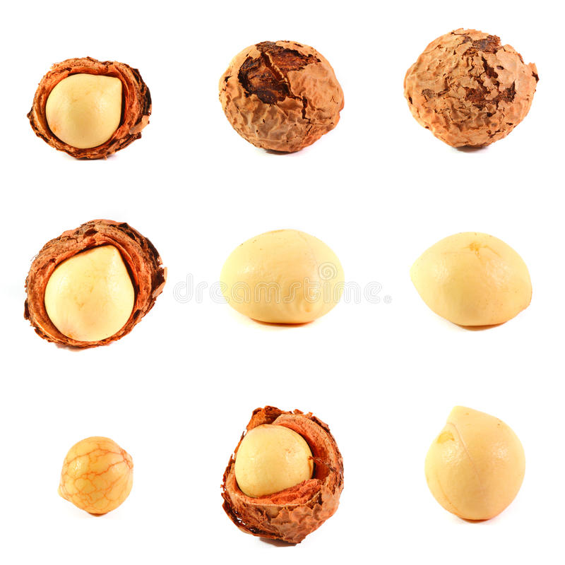 Assorted Callophylum Fruit and Seed stock image
