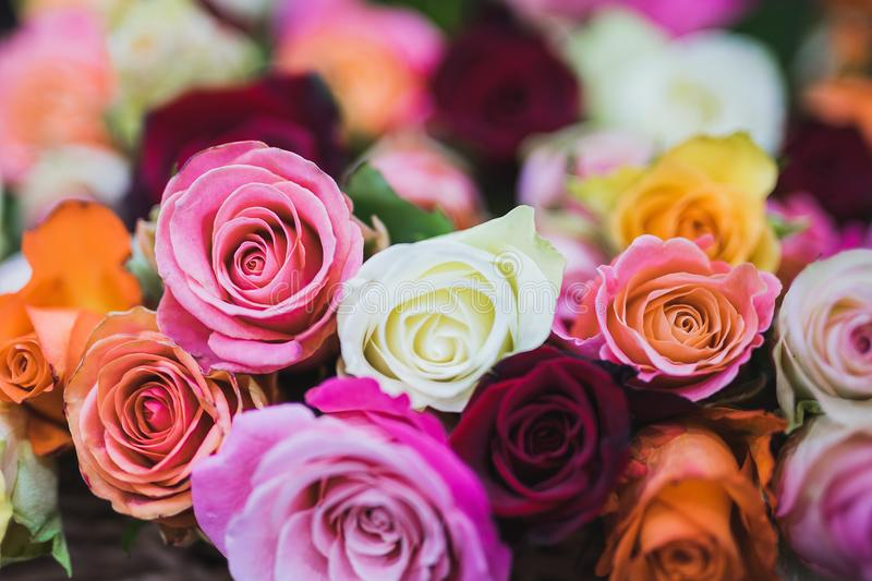 Assorted Color of Rose Flowers royalty free stock photography