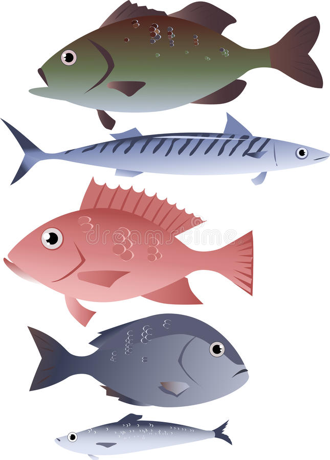 Assorted edible fish stock vector image 62252321 for Types of edible fish