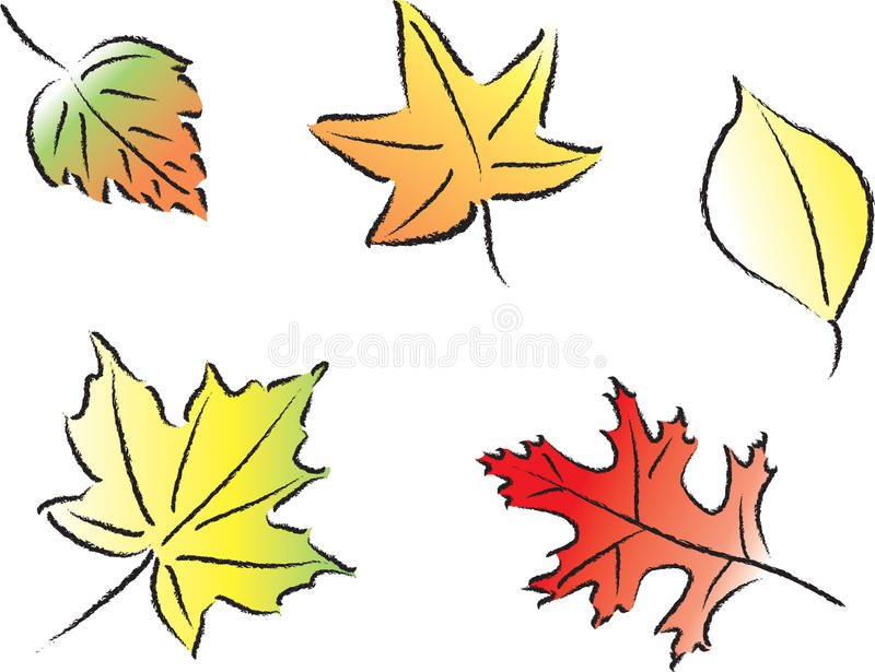Assorted Fall Leaves. Various common fall leaves in fall colors royalty free illustration