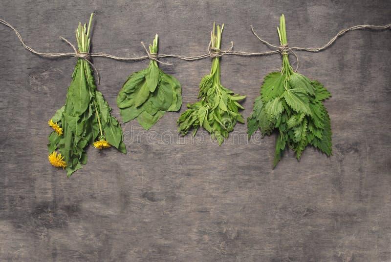 Assorted hängende Bündel der essbaren wilden Kräuter des Frühlinges: Nessel, DA lizenzfreie stockfotos