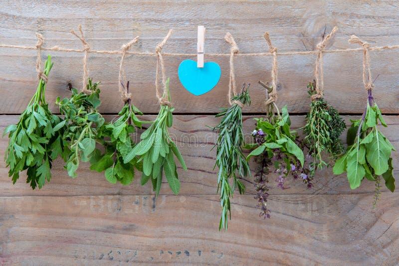 Assorted hängende Kräuter, Petersilie, Oregano, Minze, Salbei, Rosmarin, swee stockfotografie