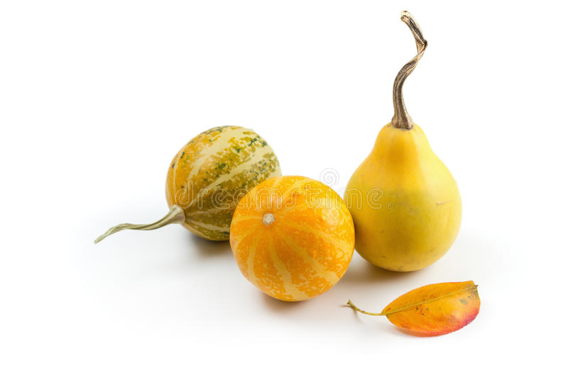 Assorted ornamental gourds royalty free stock images