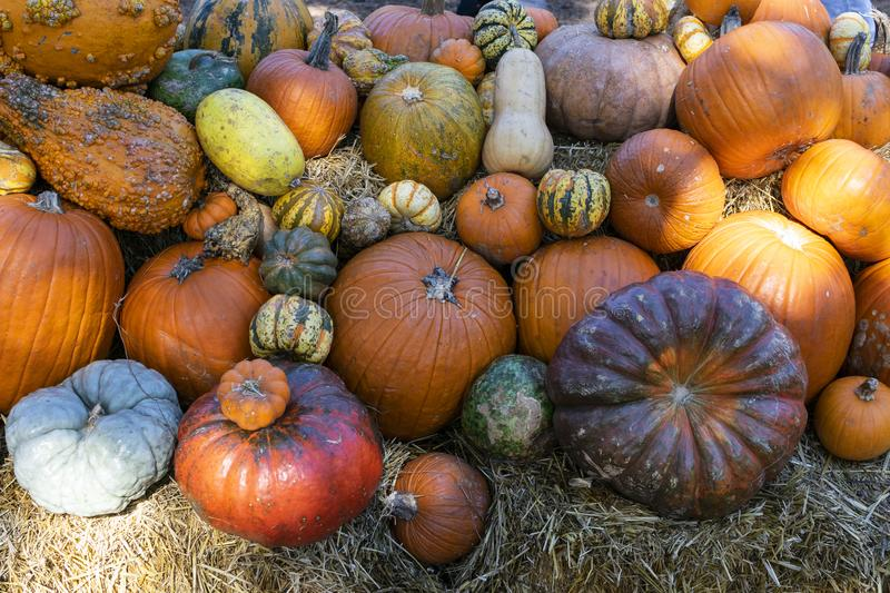Assorted pile of colorful pumpkins and gourds. stock images