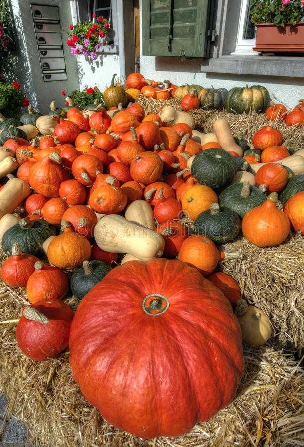 Free Assorted Pumpkins Stock Photography - 33872212