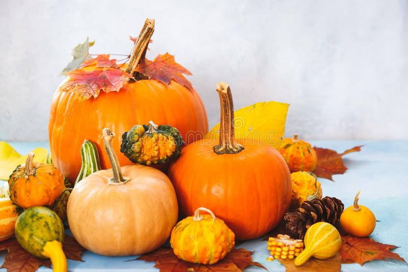 Assorted pumpkins and gourds for fall arrangement royalty free stock images