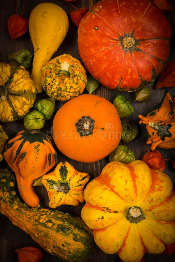 Assorted pumpkins for Thanksgiving and Halloween stock photography