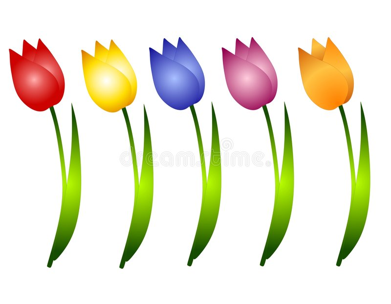 Assorted Spring Tulips Flowers Clip Art royalty free illustration
