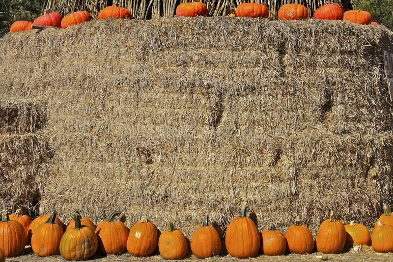 Assorted Thanksgiving Pumpkins on hay royalty free stock image