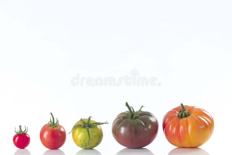 Assorted tomatoes heirloom isolated on white stock photos