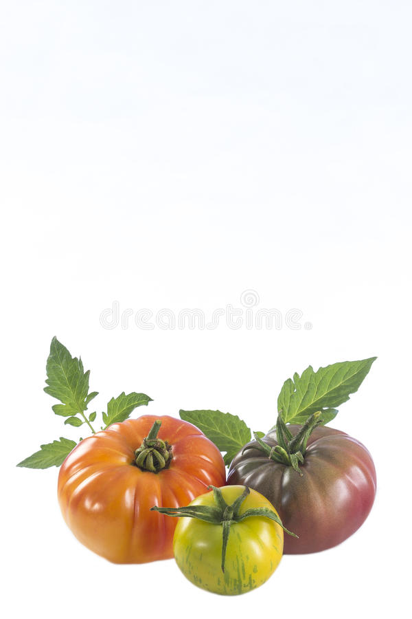 Assorted tomatoes heirloom isolated on white stock photography