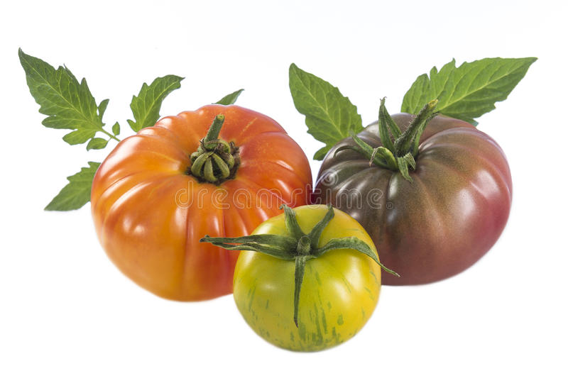Assorted tomatoes heirloom isolated on white royalty free stock photos