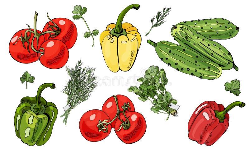 Assorti des légumes et des paquets d'herbes Les tomates, concombre, poivre illustration libre de droits
