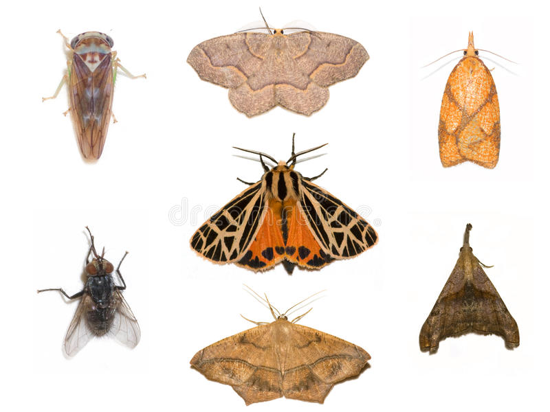 Assortiment d'insecte photos libres de droits