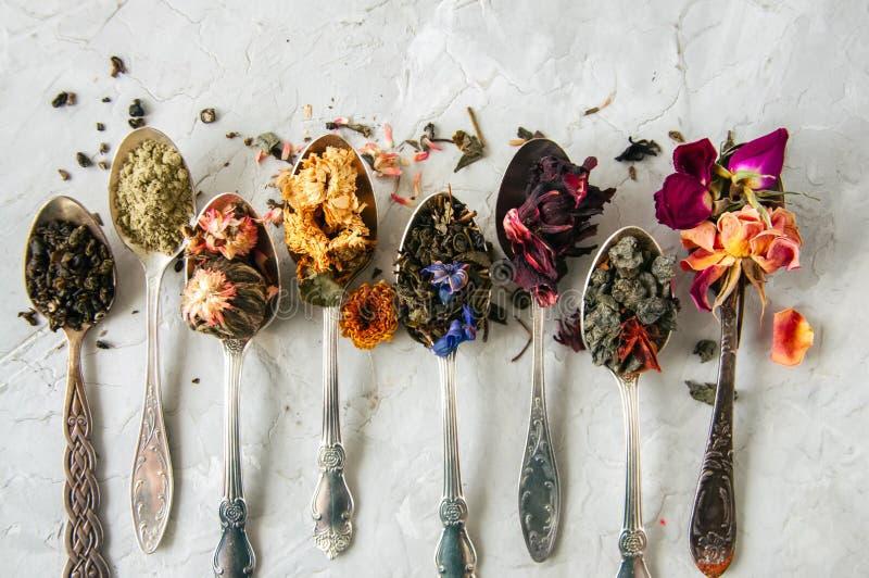 Assortiment de thé vert sec de fines herbes et de fleur dans cuillères sur W photos stock