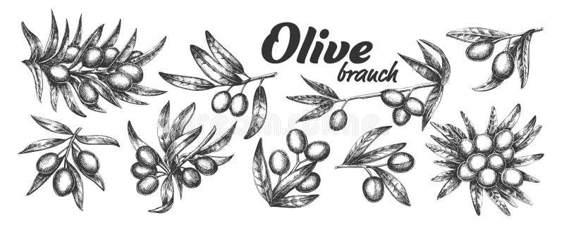 Assortiment Olive Branch Set Ink Vector différente illustration stock