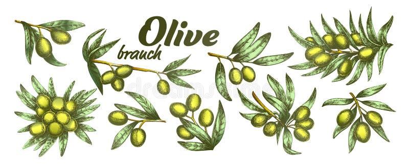 Assortiment Olive Branch Set Ink Vector différente de couleur illustration de vecteur