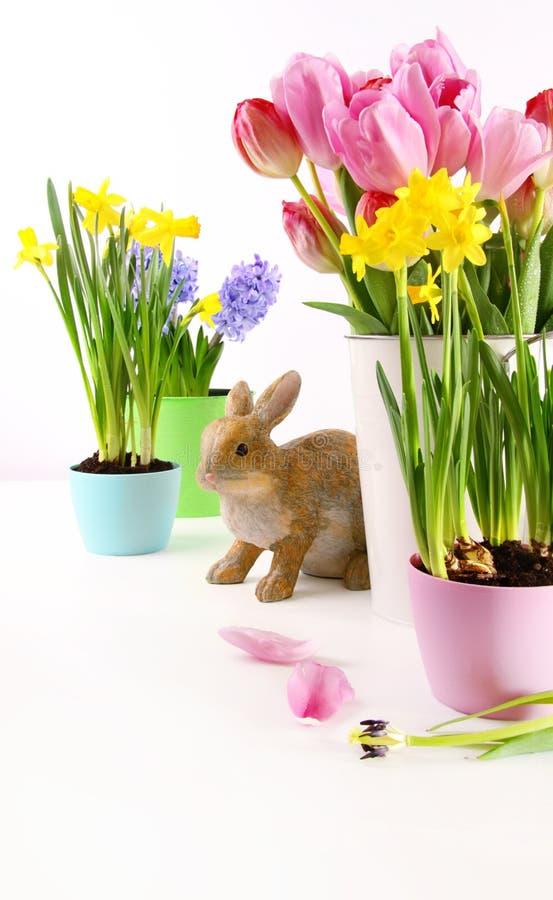 Assortiment van kleurrijke de lentebloemen voor Pasen stock foto's