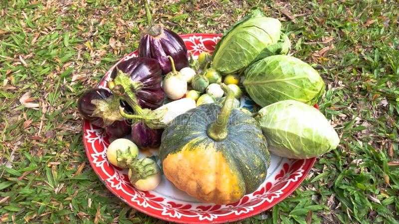 Assortiment van verse groenten royalty-vrije stock foto