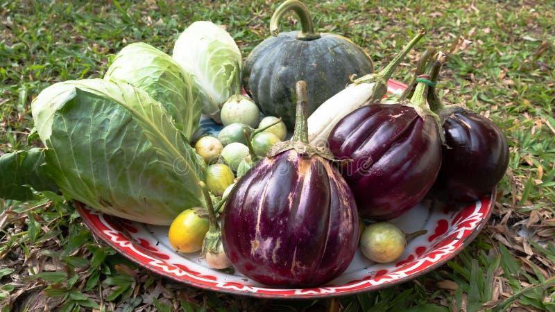 Assortiment van verse groenten royalty-vrije stock afbeeldingen