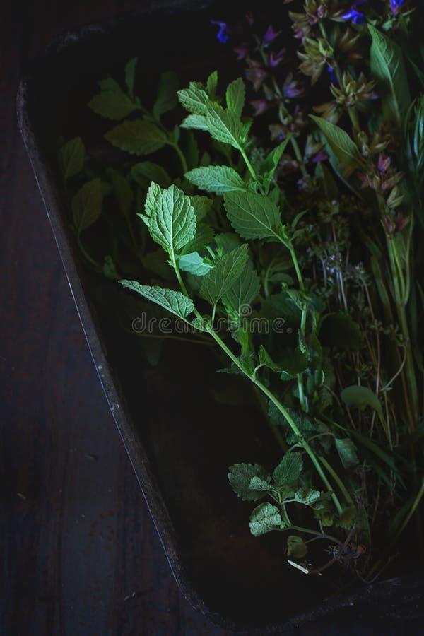 Assortiment van verse kruiden royalty-vrije stock foto