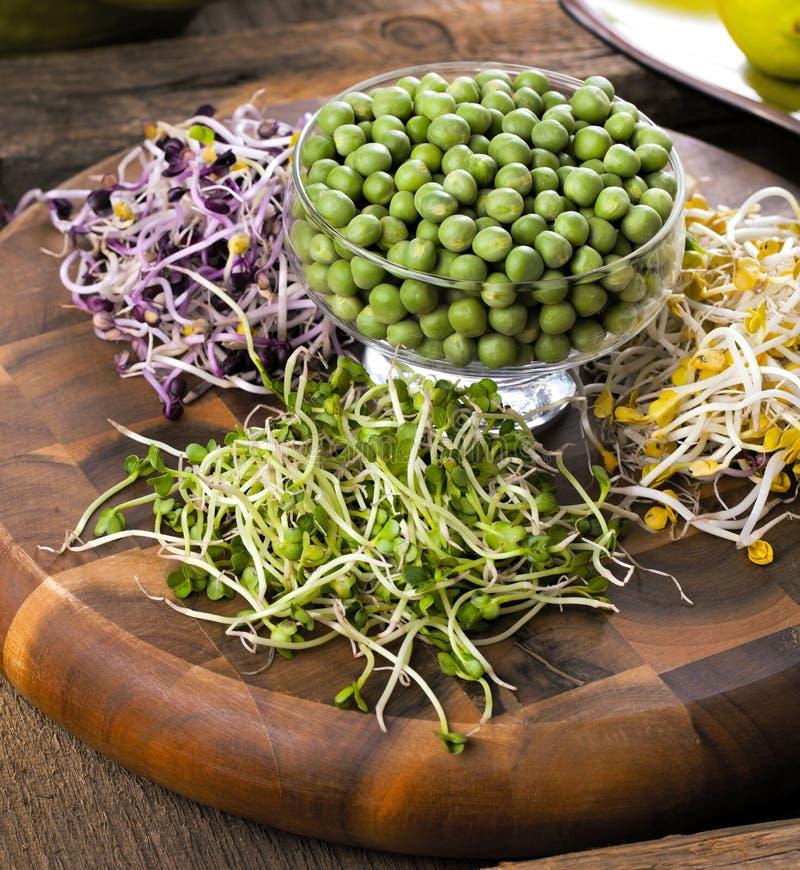 Assortimento di micro verdi Cavolo crescente, alfalfa, girasole, AR fotografia stock libera da diritti