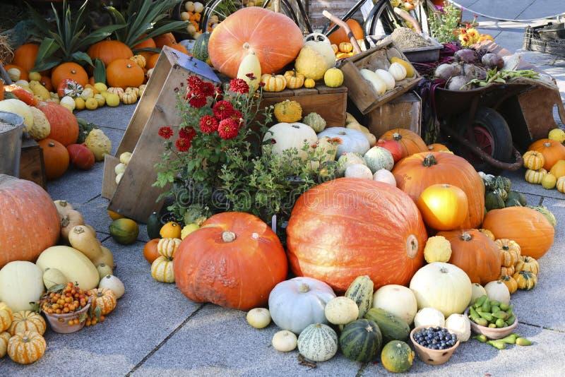 Assortimento fresco delle verdure Composizione delle verdure variopinte nel tempo di raccolto fotografia stock libera da diritti