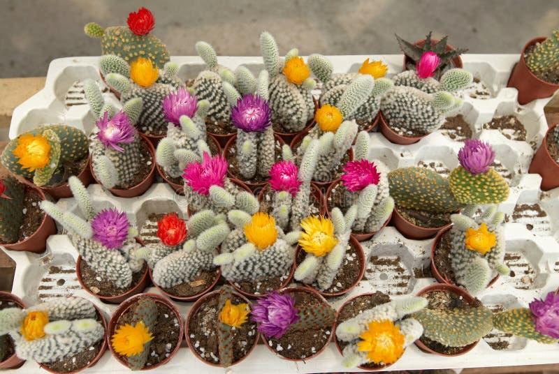 Assortment Of Cactus 2 Stock Image
