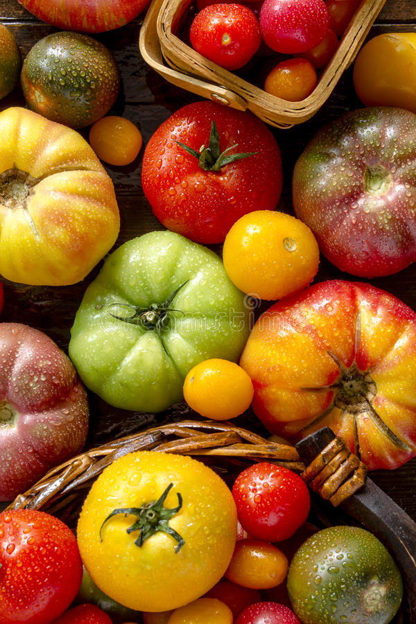 Assortment of Fresh Heirloom Tomatoes. Colorful assortment of fresh organic heirloom tomatoes sitting on wooden table stock photo