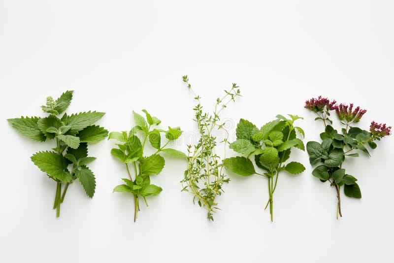 Assortment of fresh herbs catnip, mint, thym, lemon balm and or. Egano on white background royalty free stock photo