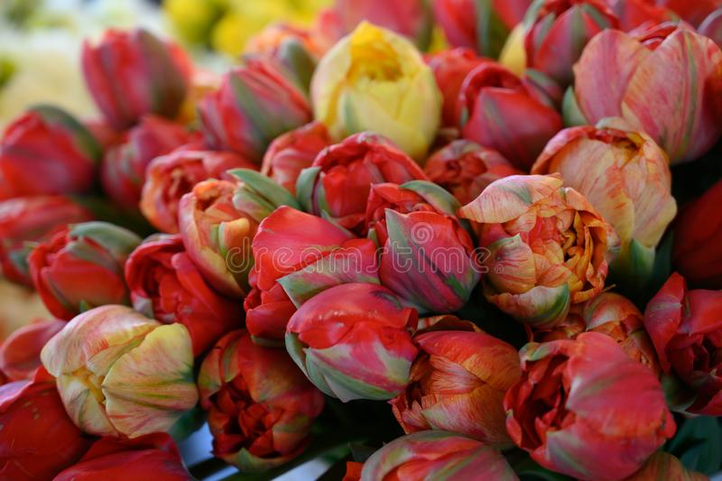 Fresh Peonies on display at local flower market stock photos