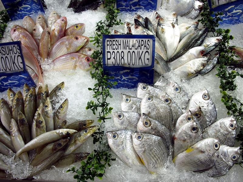 An assortment of fresh raw fish and seafood on sale at a grocery store. stock image