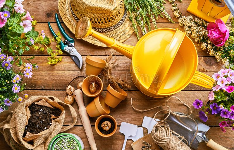Garden tools and plants for potting into pots. Assortment of garden tools and colorful spring plants for potting into little terracotta flowerpots on a rustic royalty free stock photography
