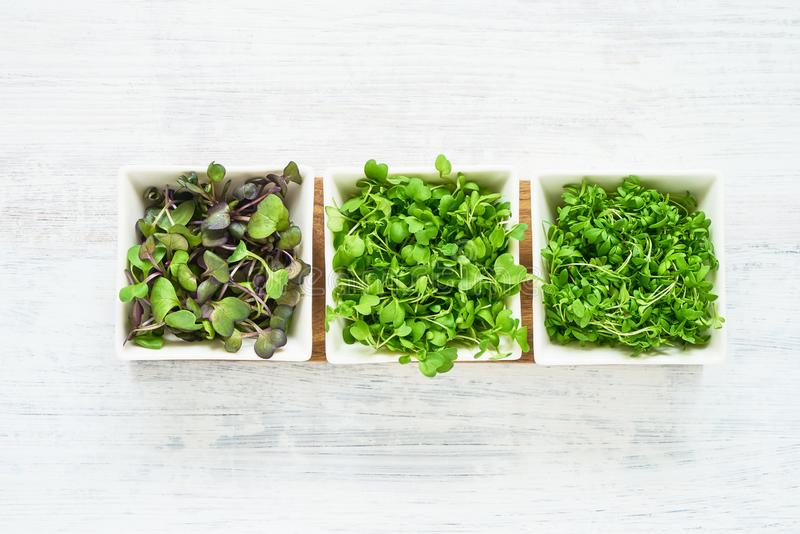 Assortment of micro greens on white background. Germinated radish, mustard, cress lettuce seeds in white bowl. Healthy food stock photos