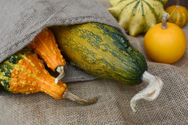 Assortment of orange and green ornamental gourds on rough hessian. And spilling from a jute sack royalty free stock image