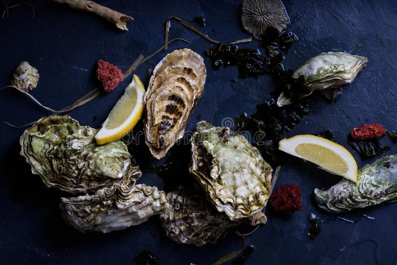 Assortment of oysters, close up, above view. stock photography