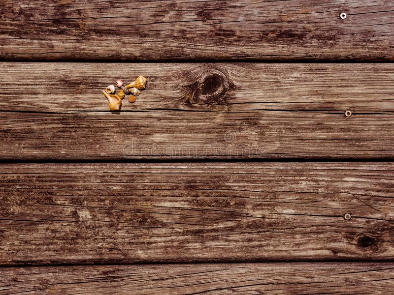 Background of Seashells on a Weathered Dock. An assortment of small seashells lying on an old textured, weathered dock royalty free stock image