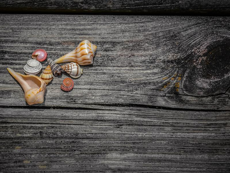 Close Up of Seashells on a Weathered Dock. An assortment of small seashells lying on an old textured, weathered dock royalty free stock photography
