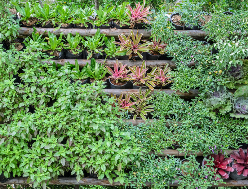 Assortment vegetable garden stock photos