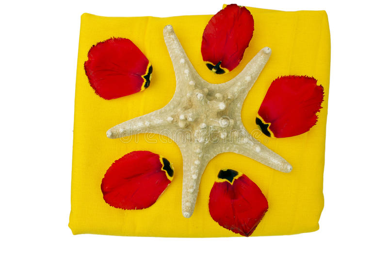 Assunto dos termas com tulips e um escudo do mar imagens de stock