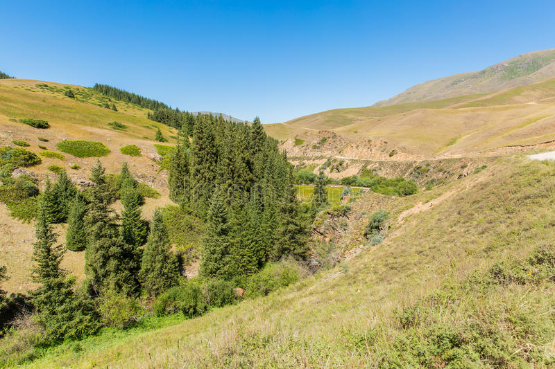 Assy plateau in Tien-Shan mountain in Almaty, Kazakhstan,Asia at summer. royalty free stock photo