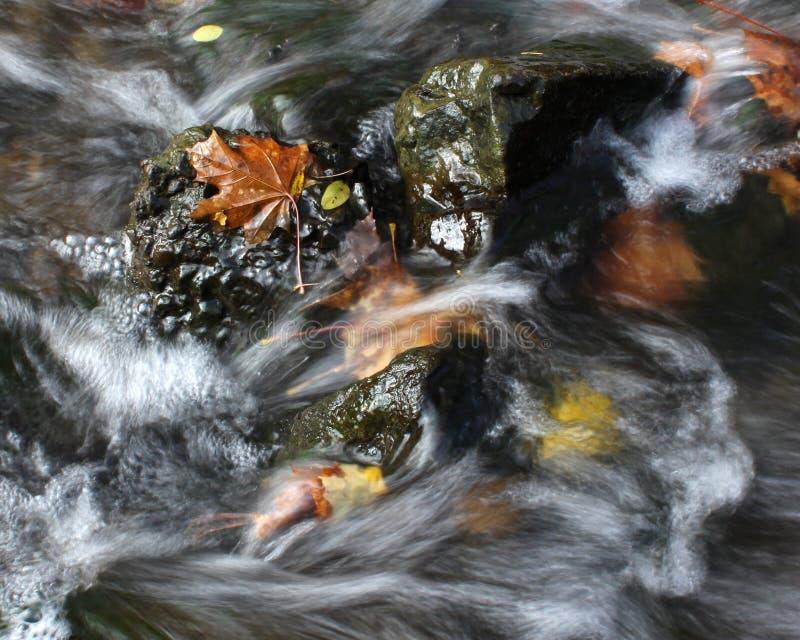 asterów jesień magenta nastrój wiele menchie obrazy stock