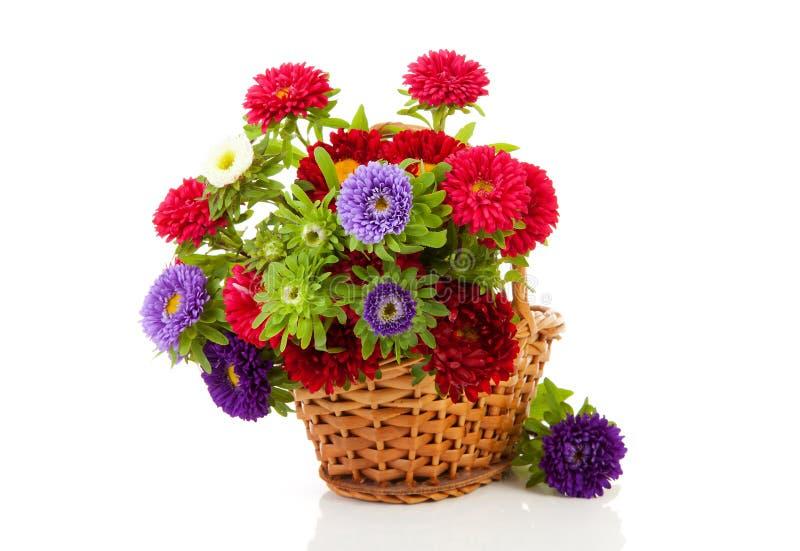 asterów koszykowej trzciny kolorowi kwiaty zdjęcia royalty free