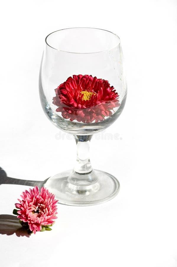 Download Aster fotografia stock. Immagine di fiore, sole, aster - 3144778