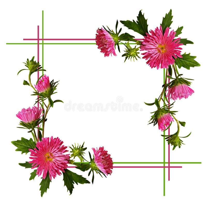 Aster blommar sammansättning och ramen royaltyfri illustrationer