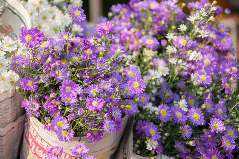 Aster flower at marketplace. Blooming aster flower at marketplace royalty free stock image