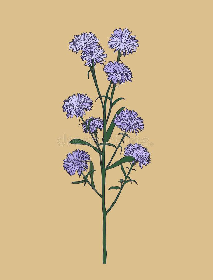 Free Aster Flower , Sketch Vector. Royalty Free Stock Photos - 103118368