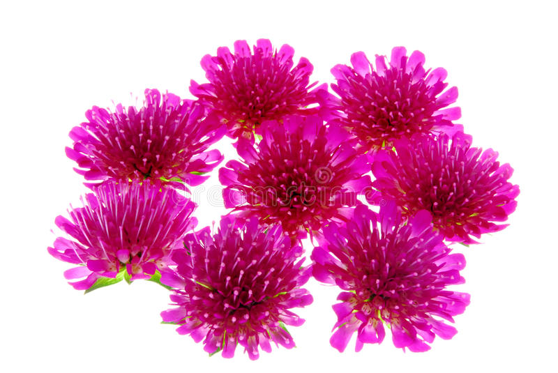 Download Aster flowers stock image. Image of summer, detail, aster - 25102801