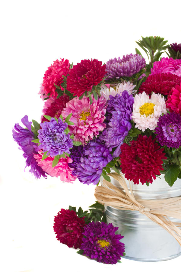 Download Aster flowers stock photo. Image of floral, celecbration - 26585866