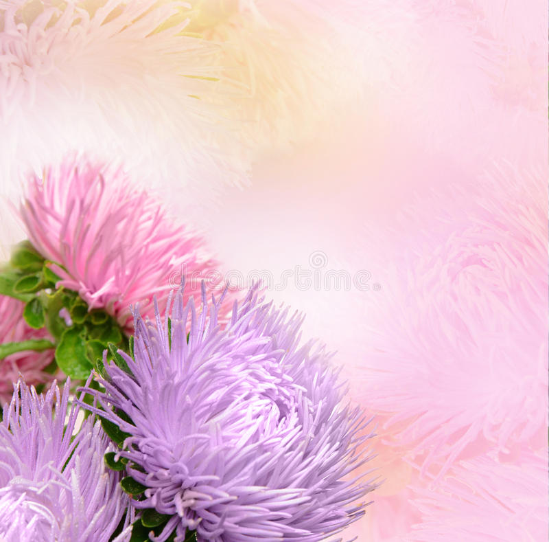 Download Aster flowers stock image. Image of up, head, flowers - 26629935
